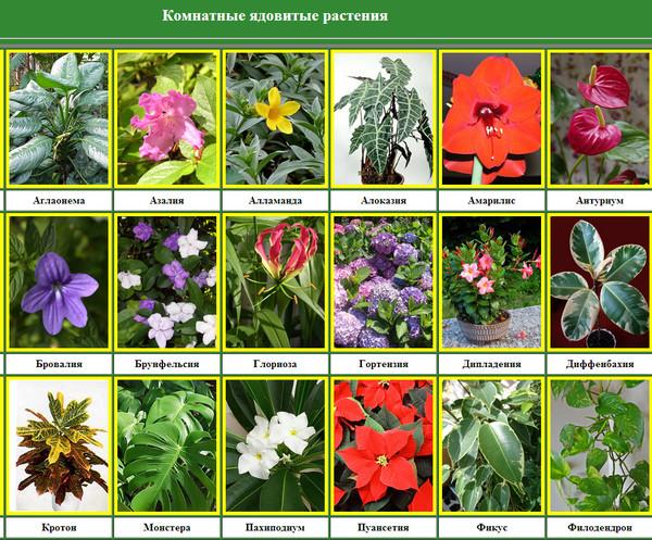 Опасные цветы для детей